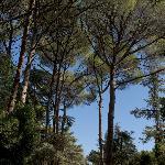 Sentiers de pins