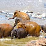 elephant orphanage 2