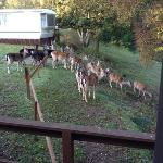 lots of deer that will eat out of your hand