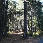 la forêt dans la montée