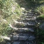 some of the stairs on the trails
