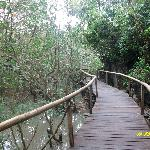 Walking trail past the mangroves.