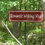 The romantic wishing vine on the walking trail.