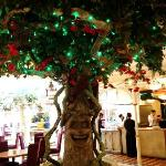 The tree at the front of the restaurant