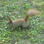 parco lazienki - scoiattolo