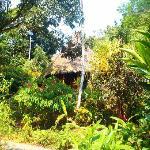 Un bungalow vu de dehors
