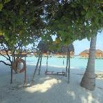 Island Swing