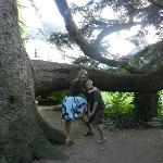 Huge tree on the lovely grounds