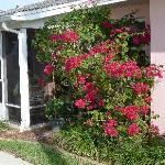 Bougainvillea outside #4