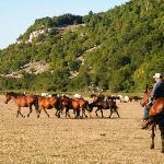Tra i cavalli Bradi