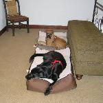 Jr. and Jake relaxing in room on provided Kong beds.