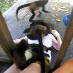Monkey nap!