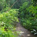 Path to Salvacion Falls