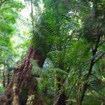 Salvacion Falls - path