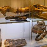 Super Croc Skull