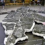 Giant Ichthyosaur (marine reptile) Skeleton