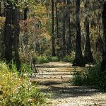 Swamp 'road'
