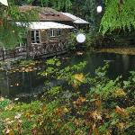 There are several ponds throughout the property. Peaceful. Tranquil. Good energy.