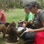 Jugando con los monos