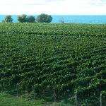 View of Lake Ontario from Konzelmann Estate Winery