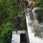 Monkey playing in Pool