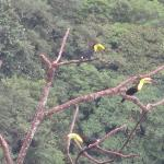 Toucans by the terrace