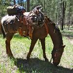 """my"" horse Redhawk"