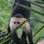 Loved the monkeys!!!