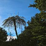 Elegant fern rising above the shady garden floor