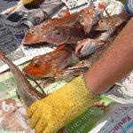 Fresh Fish for Dinner
