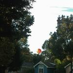 Hot air balloons fly over every morning...