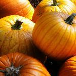 Long & Scott Farms Pumpkin Patch