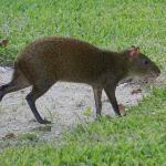 shy funny little mammal