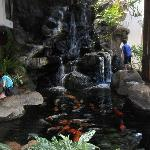 Waterfall & Koi Pond in Waikiki Banyan Lobby