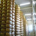Parmigiano aging room
