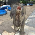 Beautiful baby elephant that comes around the resort. She was precious
