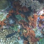 Colourful corals on house reef