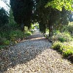 One of the lovely paths