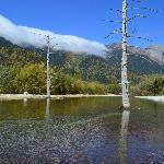 Pond Taisho