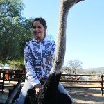 Brave girl riding the ostrich