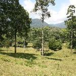 Selva Bananito Preserve