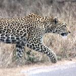 Kruger National Park S.A. Flight of the Eagle Safaris and Tours will afford you these moments