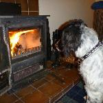 Log Fire & mesmerised Spaniel