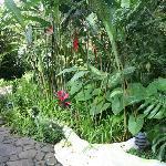 Gardens of the finca