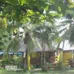playa zancudo Jungle Juice bar , El Coquitos