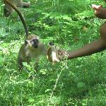 Feeding the wild monkeys - highlight of my trip!