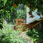 The Orange Grove Yurt