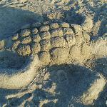 Sand 'turtle'