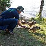 Feed ducks @ your site.