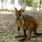 Fraser Coast Wildlife Sanctuary
